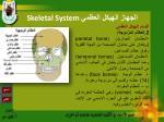 skeletal system11