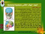 skeletal system14