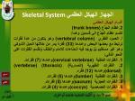 skeletal system15