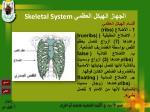 skeletal system18