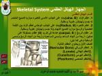 skeletal system22