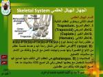 skeletal system23