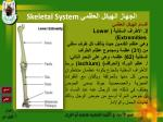 skeletal system24