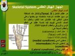 skeletal system26