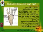 skeletal system27