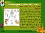 skeletal system3