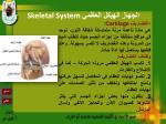 skeletal system30