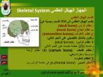skeletal system9
