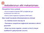 testosteronun etki mekanizmas