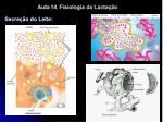 aula 14 fisiologia da lacta o15