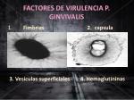 factores de virulencia p ginvivalis