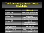 y mikrodelesyonlar nda testis histolojisi
