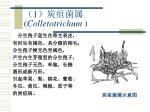 1 colletotrichum