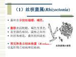 1 rhizoctonia