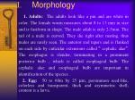i morphology1