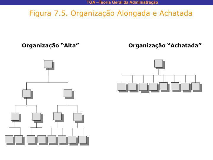 Figura 7.5. Organização Alongada e Achatada