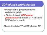 udp glukoz pirofosforilaz