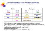current phosphospecific antibody mixtures