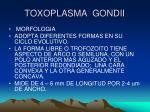 toxoplasma gondii1