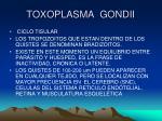 toxoplasma gondii10