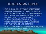 toxoplasma gondii11