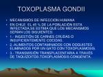toxoplasma gondii12