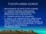 toxoplasma gondii13