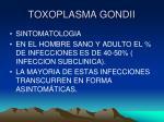toxoplasma gondii14