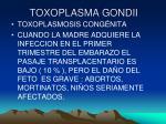 toxoplasma gondii19