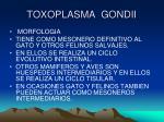 toxoplasma gondii2