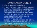 toxoplasma gondii20