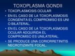 toxoplasma gondii21