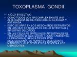 toxoplasma gondii3