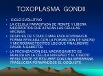 toxoplasma gondii4