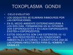 toxoplasma gondii5