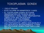 toxoplasma gondii6