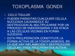 toxoplasma gondii7