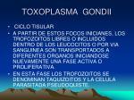 toxoplasma gondii8