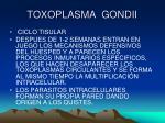 toxoplasma gondii9