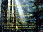 definiciones de bosques