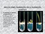 aplicaciones inmediatas de la ingenier a gen tica