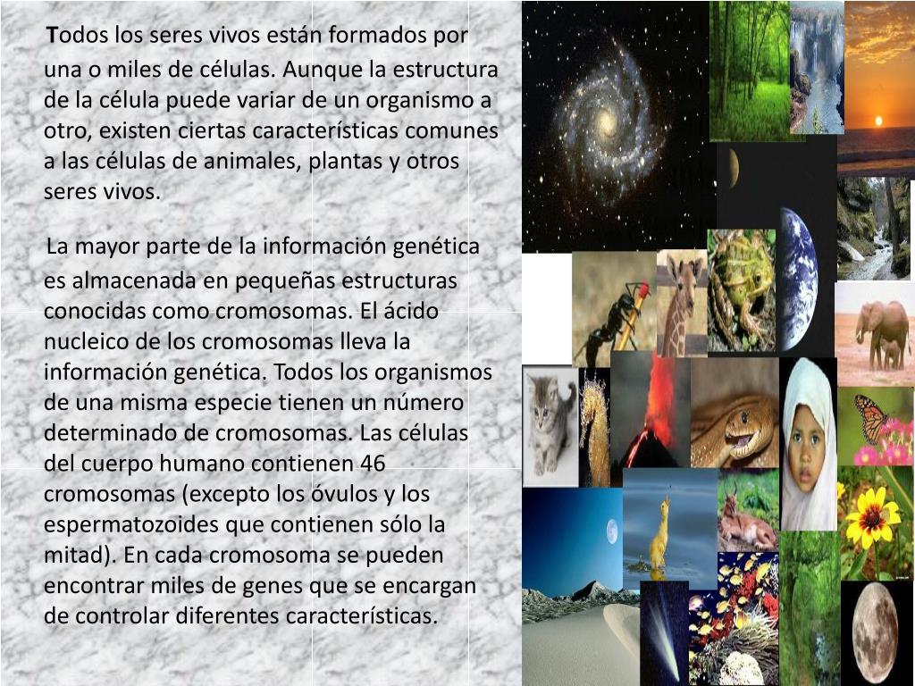 Ppt Los Seres Vivos Y El Adn Powerpoint Presentation Free