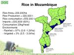 rice in mozambique