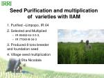 seed purification and multiplication of varieties with iiam