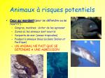 animaux risques potentiels