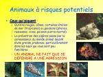 animaux risques potentiels1