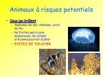 animaux risques potentiels2