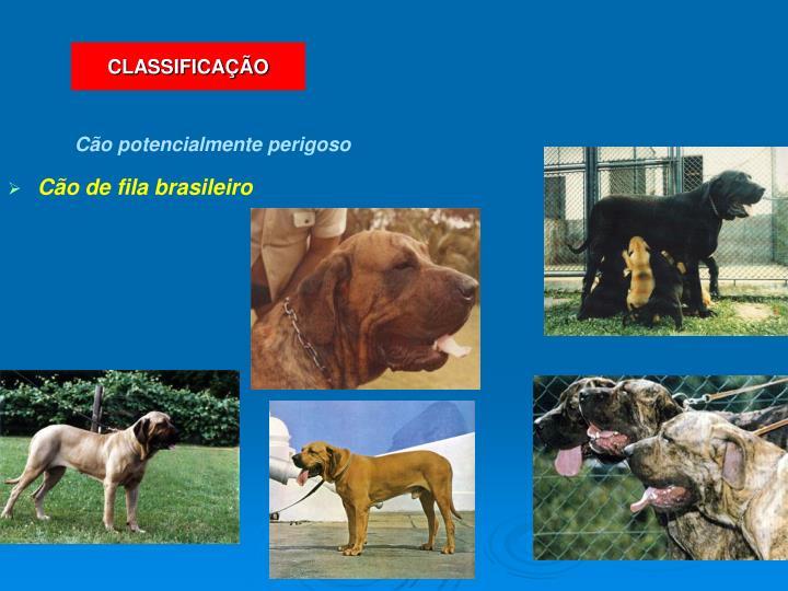 Cão de fila brasileiro