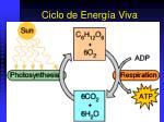 ciclo de energ a viva