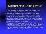 metabolismo carbohidratos1